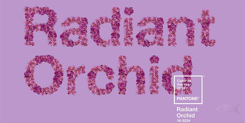 PANTONE Orquídea Radiante 18-3224
