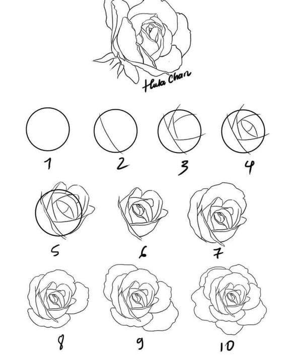 Pasos para dibujar una rosa